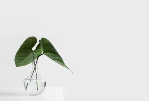 白ホリスタジオで撮影された植物の画像